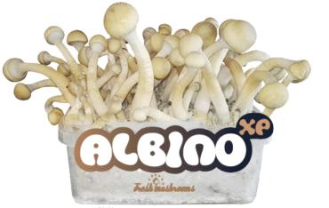 albino-cropped