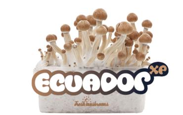 ecuador-cropped