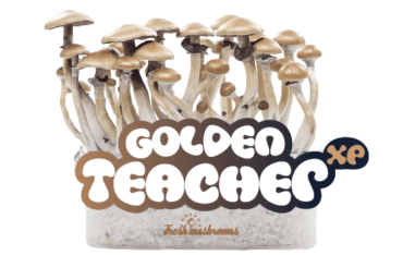 golden-teacher-cropped