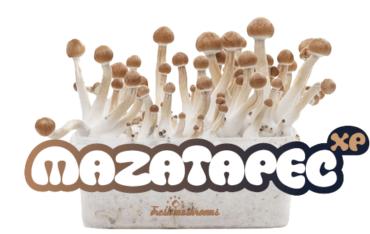 mazatapec-cropped